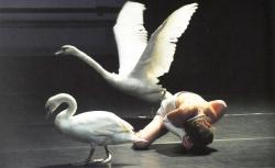 Biennale de danse 14