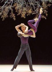 Wings of wax boston ballet